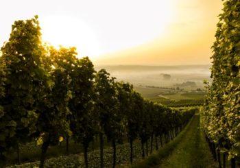Kvalitní víno až k Vám domů