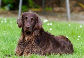 Bylinky v psích granulích – k čemu jsou dobré?