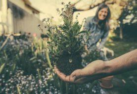 Nematop – hlístice, které zlikvidují škůdce na vaší zelenině a květinách